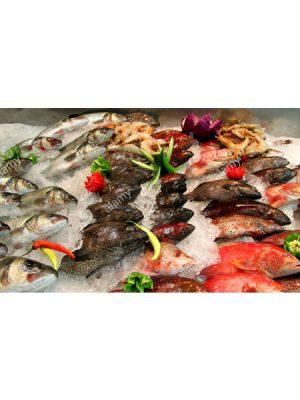 FISH-FROZEN