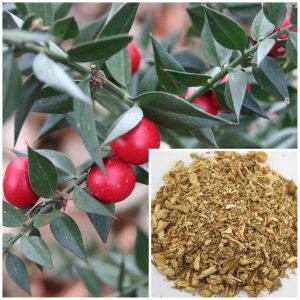 Butchers Broom